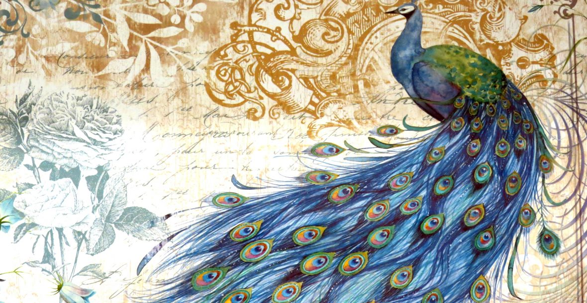 India Rose Strings quartet, trio, duo and singer play for weddings, events and parties - Peacock Artwork by Carolyn Foster